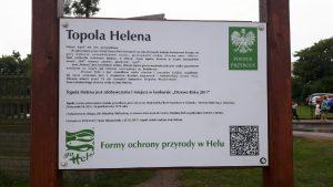 Topola Helena